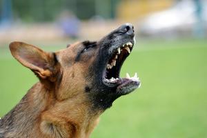 Bei der Gefährdungshaftung wird Schmerzensgeld verschuldensunabhängig gezahlt, z. B. bei der Tierhalterhaftung.